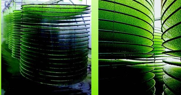 La Réunion se lance dans les biocarburants à base d'algues