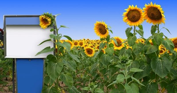 PSA finance un cursus sur les biocarburants