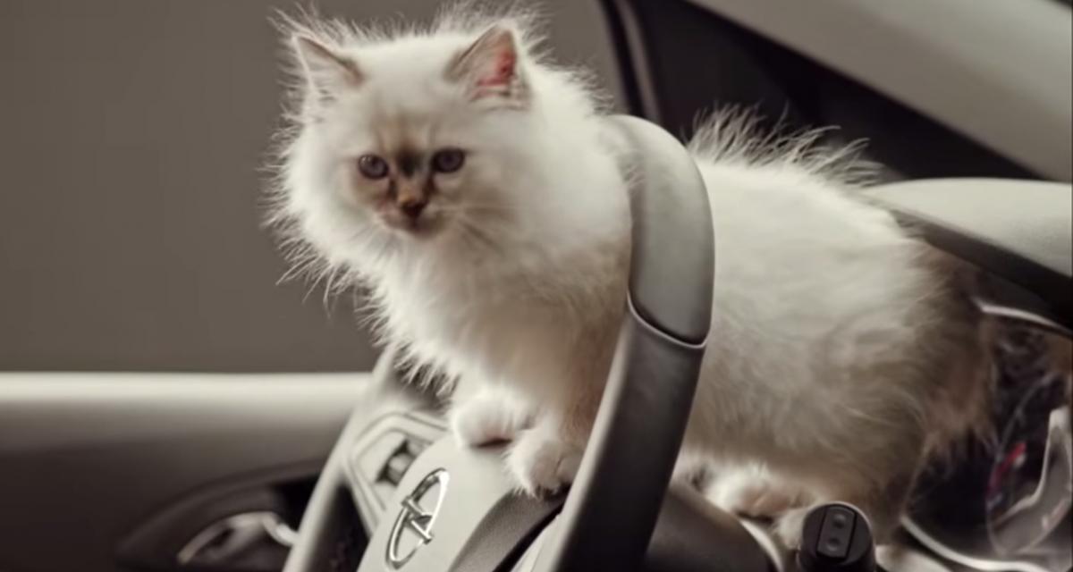 Trois conseils pour voyager en voiture avec son animal