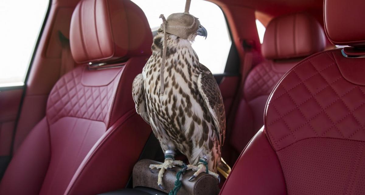 Bentley Bentayga Falconry par Mulliner : l'ami des faucons