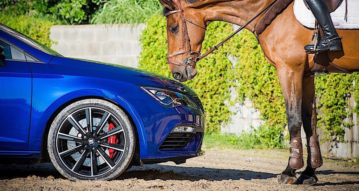 Seat Leon Cupra ST : 300 ch contre un cheval