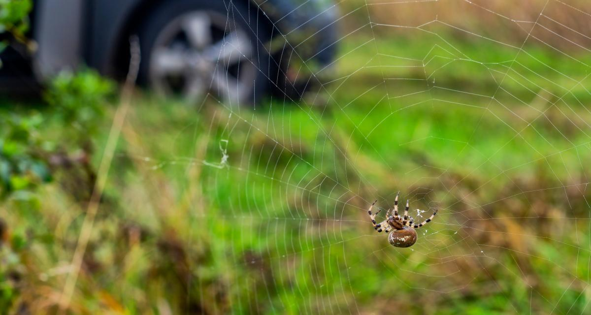 Elle panique en voyant une araignée et plante sa voiture