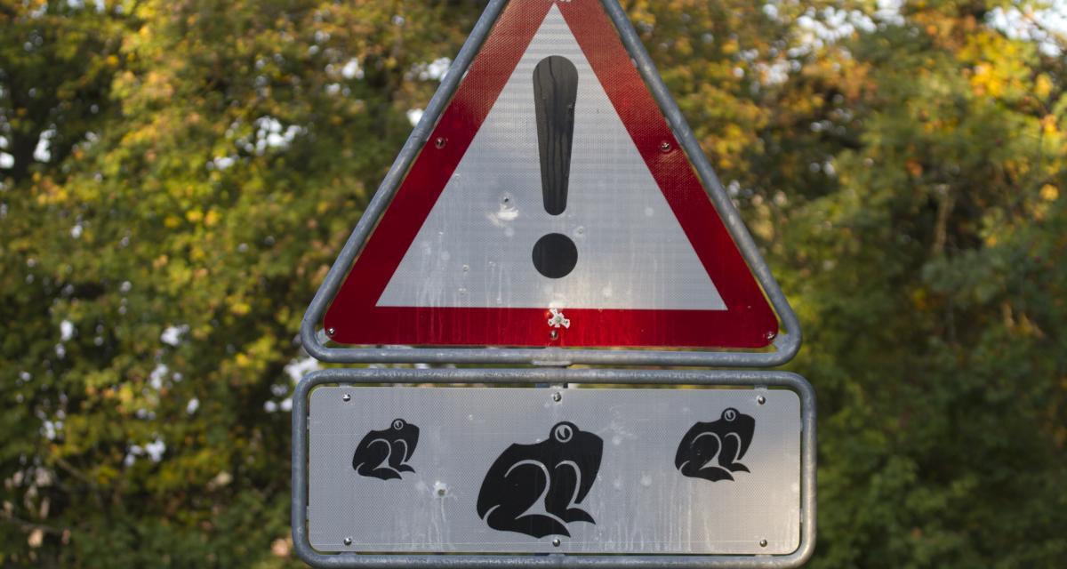 Bretagne : des grenouilles font fermer une route