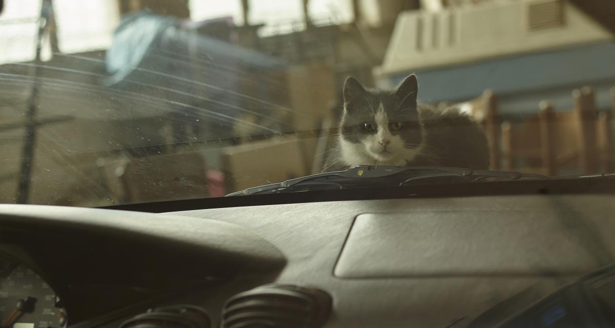 Insolite : il roule 200 km avec un chat planqué sous le capot !