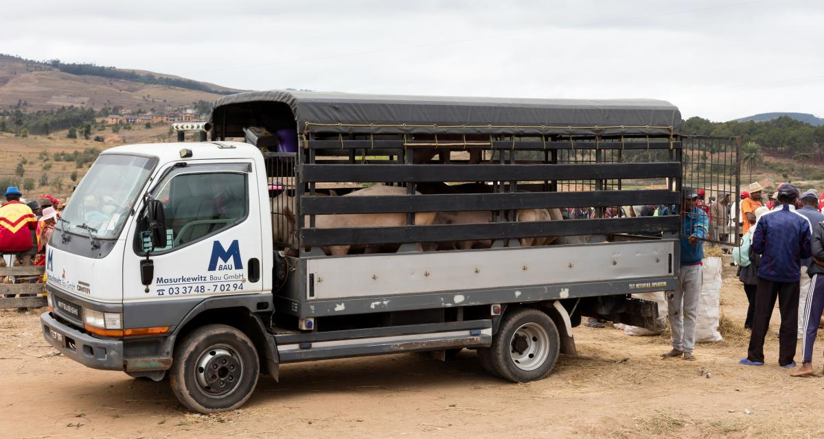 Camion renversé : le poids-lourd breton n'arrivera pas à bon porc !