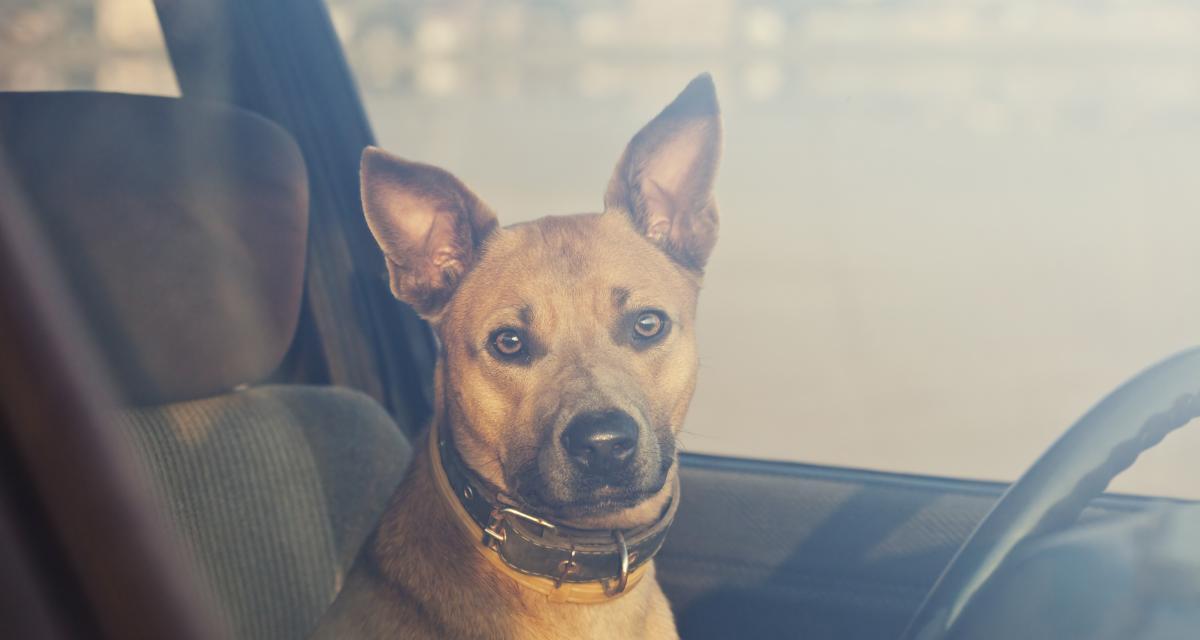Fous du volant : par manque de place, il envoie son chien sur le toit de sa voiture