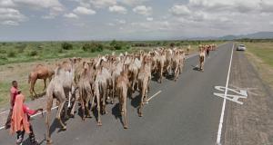 Un véhicule Google Maps freiné par un troupeau de dromadaires