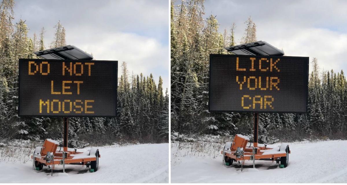 Avis aux Canadiens : ne laissez pas les élans lécher votre voiture !