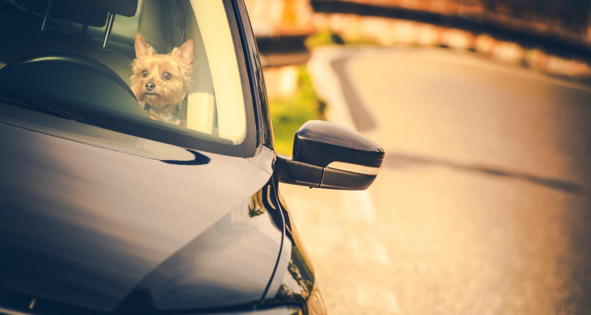 Son chien passe la marche arrière de son van, un accident improbable au Canada