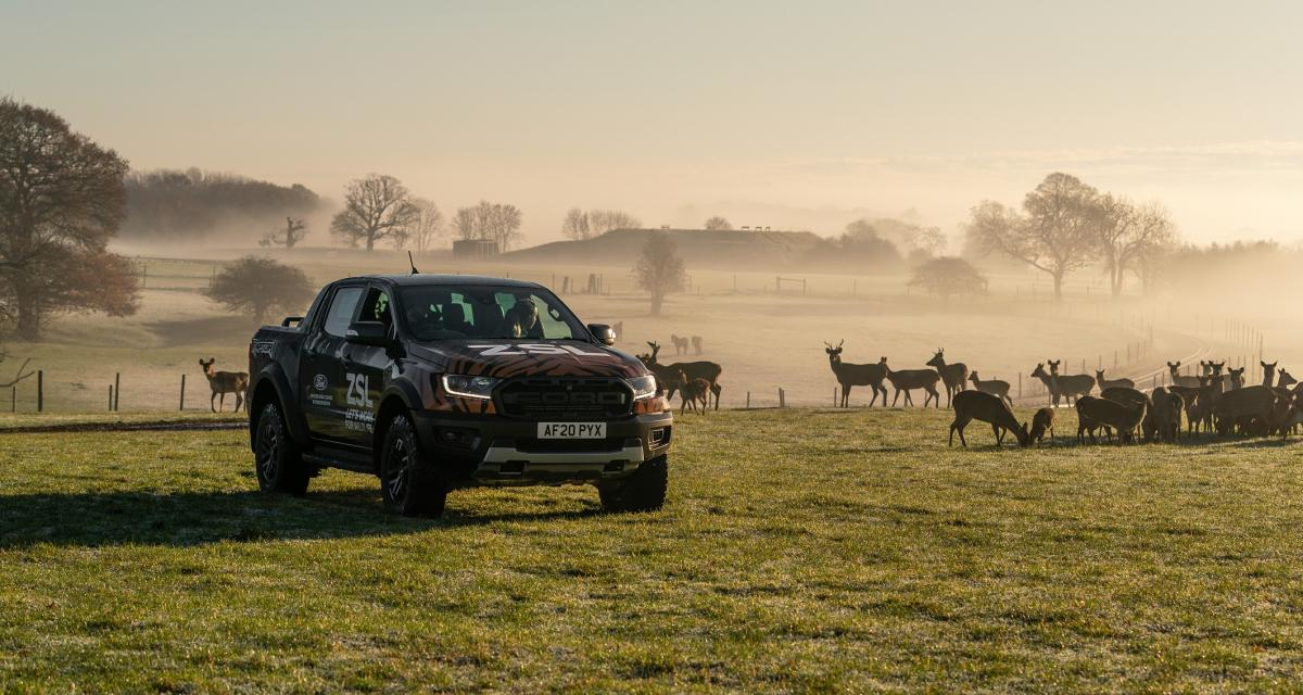 Ford Ranger Raptor : l'allié idéal pour nourrir les bêtes sauvages