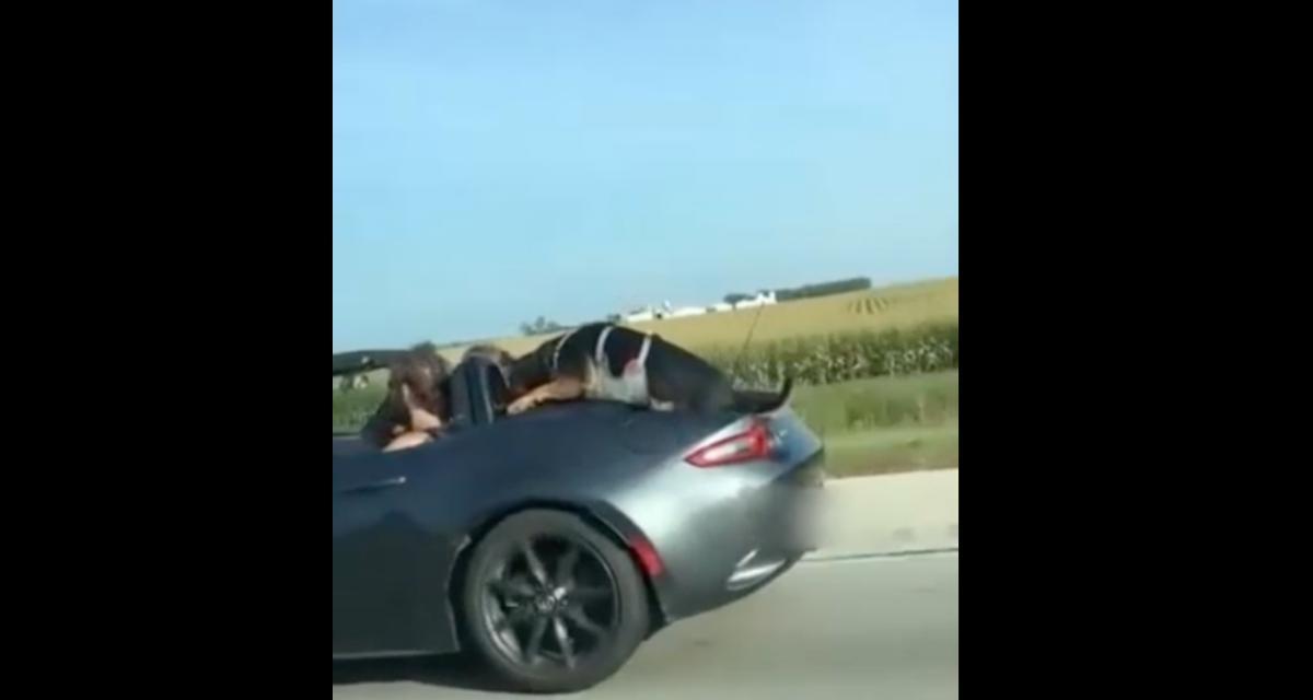 VIDEO - Transporter un chien dans une décapotable à deux places, ce n'est pas forcément facile, à moins que…