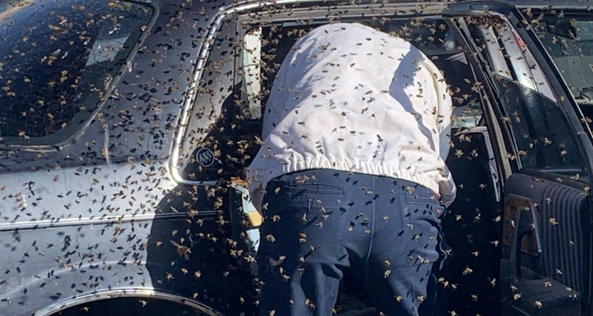Un nid de 15.000 abeilles s'installe dans sa voiture pendant qu'il fait les courses