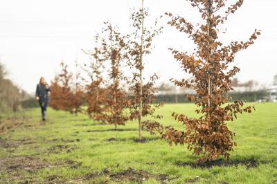 100 arbres pour les 100 ans de Bentley | Les photos sur le site de Crewe